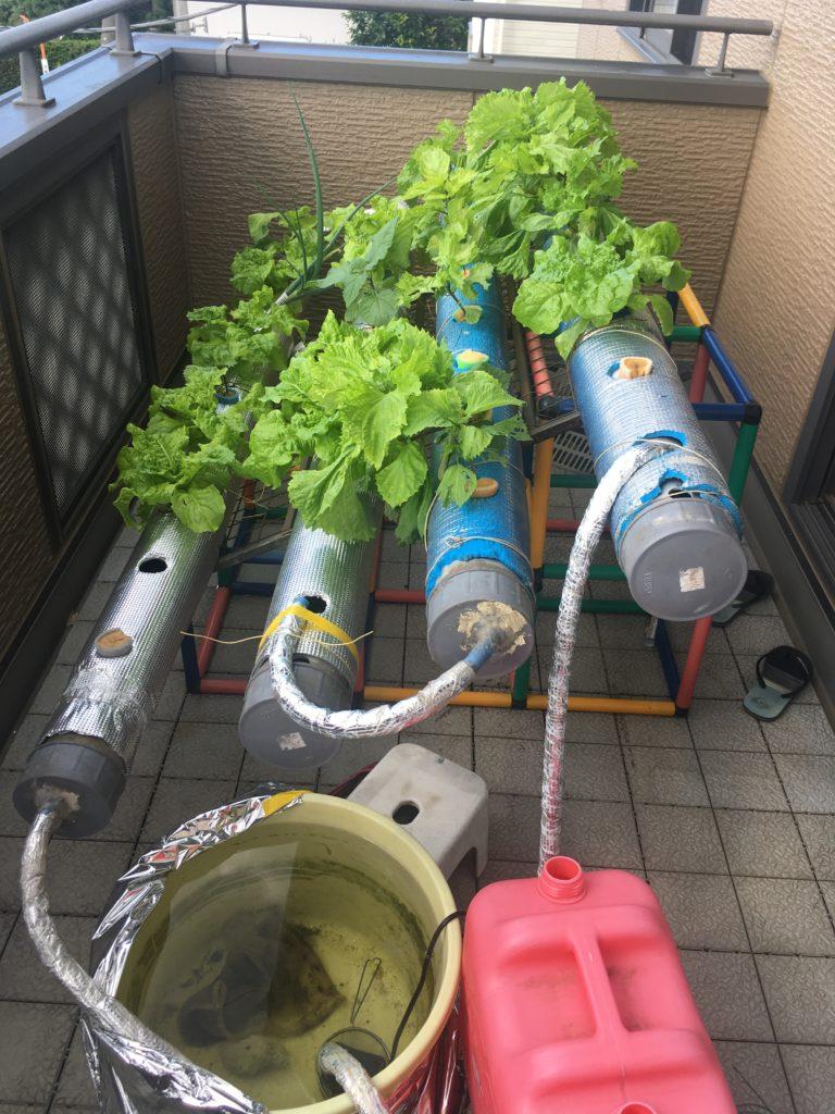 塩ビ水耕栽培装置
